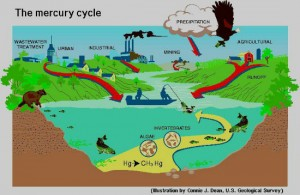 Mercury Cycle - Photo Courtesy of Women of Water Blog
