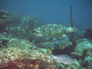 Coral reef feeding grounds